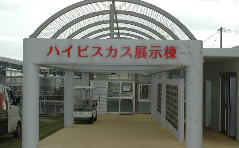伊江島ハイビスカス園